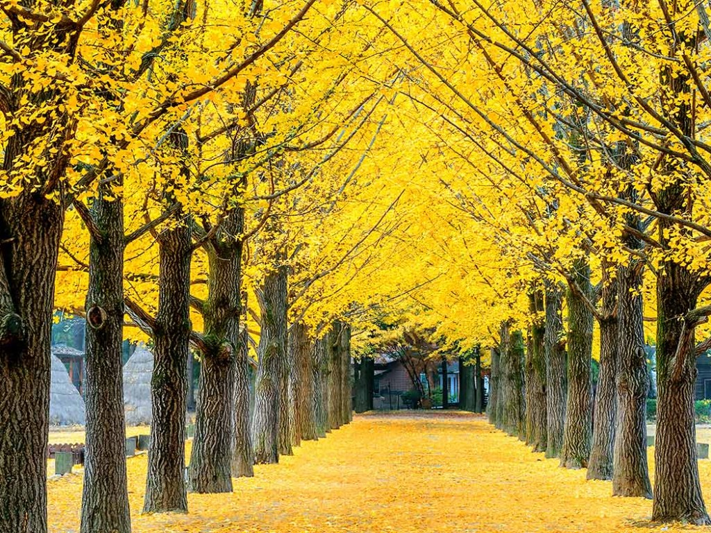 Traveling Nami Island from Seoul 0